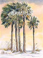Palmetto Sunrise